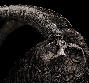 The Witch: Review